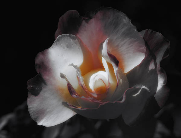 Filoli Photograph - The Wonder Of It by Linda Dunn