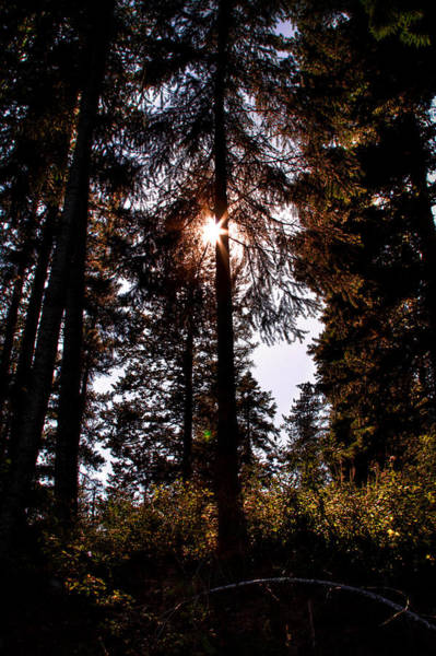 Wall Art - Photograph - The Woods At Priest Lake by David Patterson