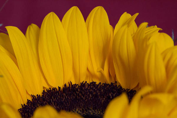 Photograph - The Yellow Blossom Leaves by Andreas Levi