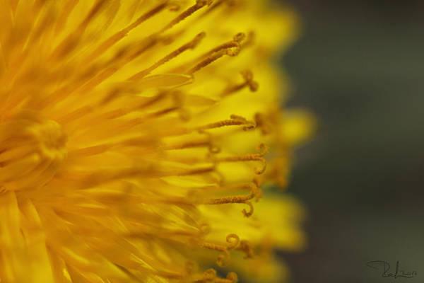 Photograph - The Yellow Invasion by Raffaella Lunelli