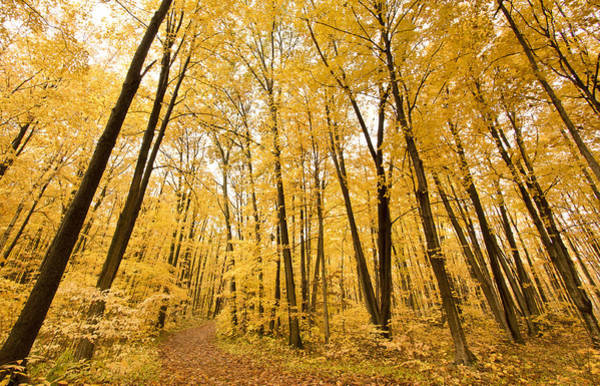 Photograph - The Yellow Season by Nick Mares
