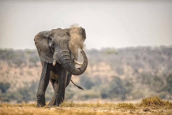 Chobe National Park Wall Art - Photograph - This Is Botswana No.  8 - Feels So Good by Paul W Sharpe Aka Wizard of Wonders