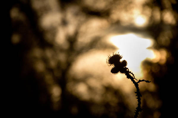 Thistle Photograph - Thistle And Weeds by Justin Albrecht