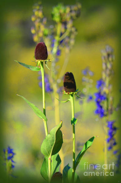 Photograph - Thistles by Donna Greene