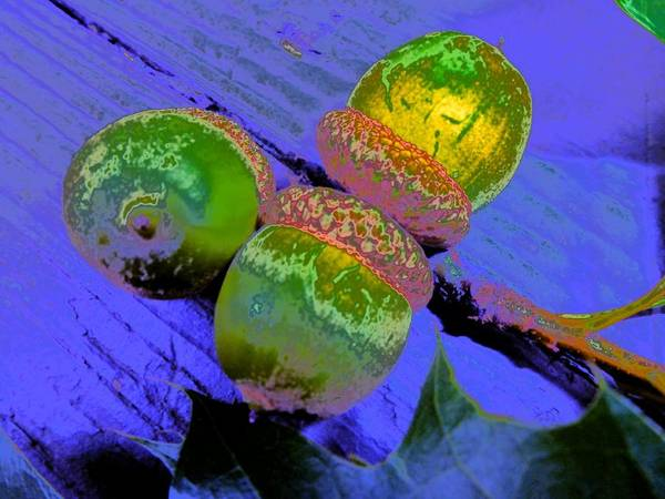 Photograph - Three Acorns Abstract by Beth Akerman
