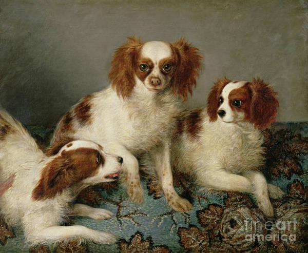 King Charles Spaniel Painting - Three Cavalier King Charles Spaniels On A Rug by English School