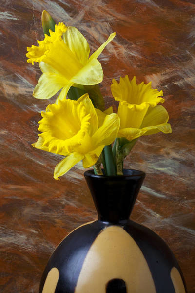 Yellow Trumpet Wall Art - Photograph - Three Daffodils by Garry Gay