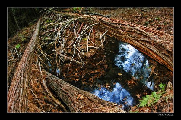 Photograph - Three Fallen Trees by Blake Richards