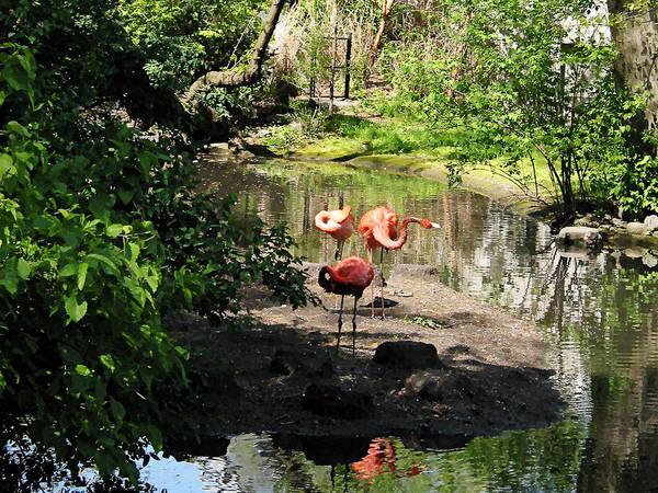 Photograph - Three Flamingos by Susan Savad