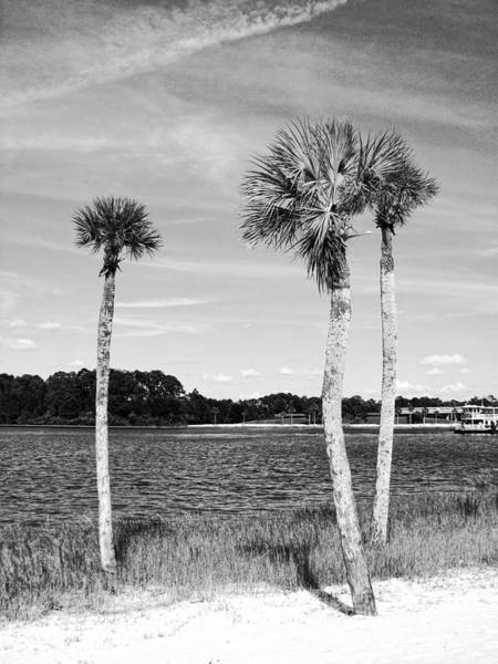 Photograph - Three Of Palm by Traci Cottingham