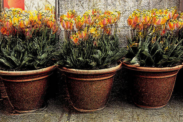 Wall Art - Photograph - Three Orange Pots by Barbara  White