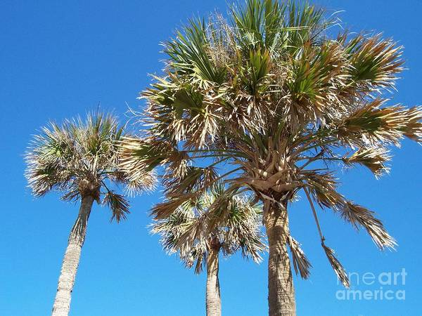 Photograph - Three Palms by Jeanne Forsythe