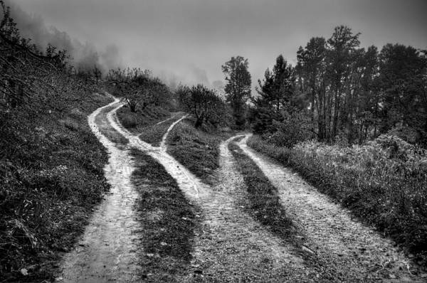 Photograph - Three Paths Meet by Williams-Cairns Photography LLC