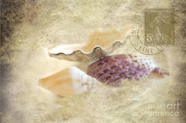 Three Seashells Photograph - Three Seashells by Betty LaRue