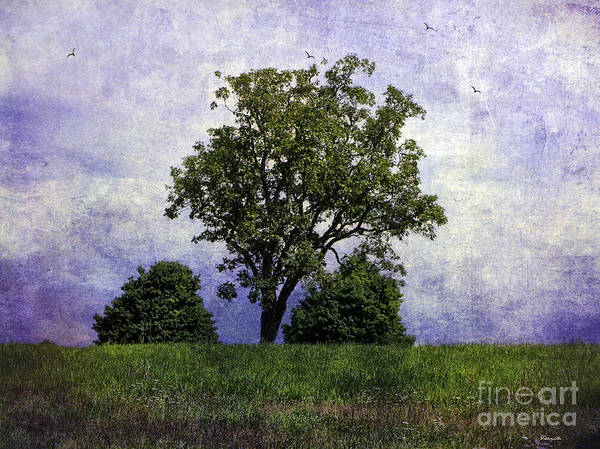 Wall Art - Photograph - Three Tree Hill 2 by Madeline Ellis
