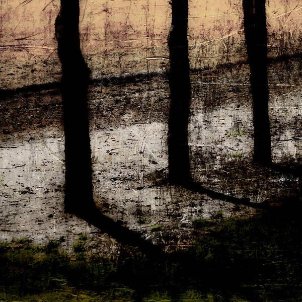 Three Trees Photograph - Three Tree Trunks by Carol Leigh
