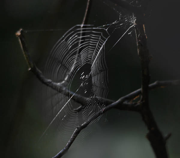 Spiderweb Photograph - Through Dreams by Susan Capuano