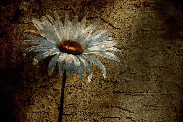 Crumble Photograph - Through The Cracks by Barbara  White