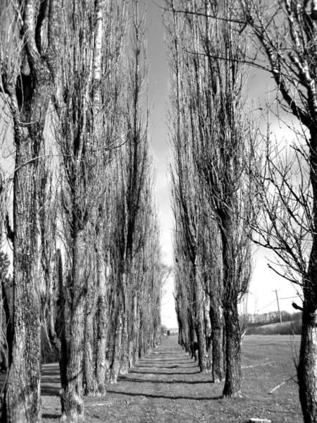 Wall Art - Photograph - Through The Trees by Jonathan Lagace