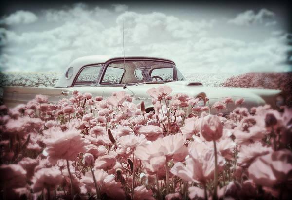 Photograph - Thunderbird Classic by Donna Pagakis