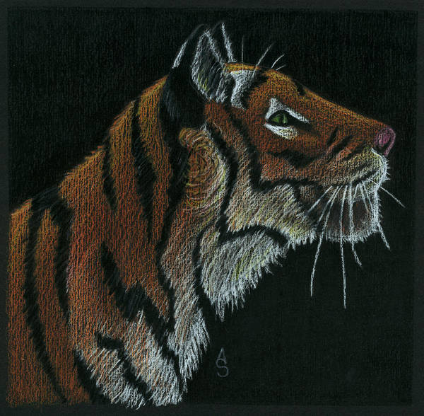 Bengal Tiger Drawing - Tiger by Anastasia Smith