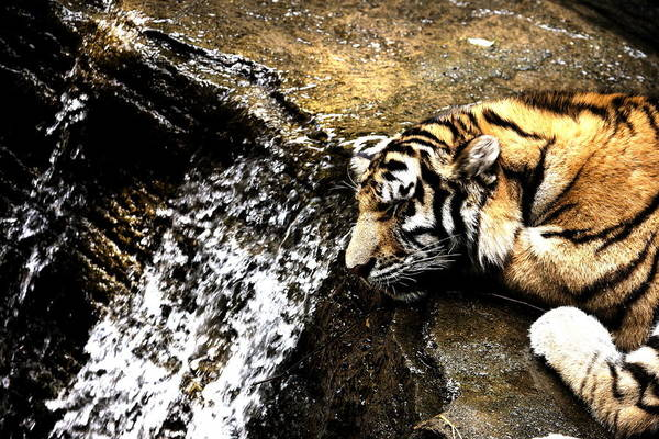 Photograph - Tiger Falls by Angela Rath