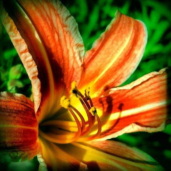 Abstract Flowers Wall Art - Photograph - Tiger Lily Series 1of4 #flowers by Marianne Dow