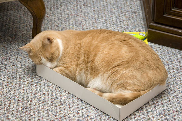 Photograph - Tight Fit Kitty by Larry Landolfi
