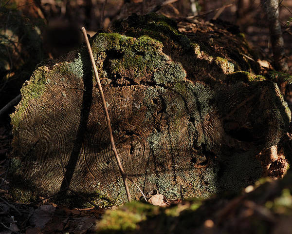 Lichens Photograph - Time by Susan Capuano