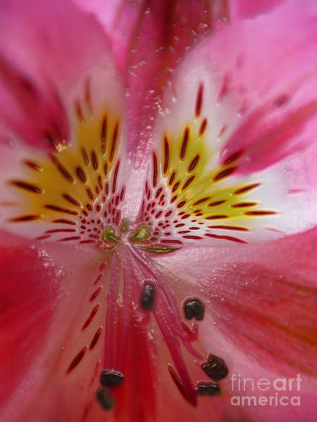 Photograph - Timeless Floral by Jeff Breiman