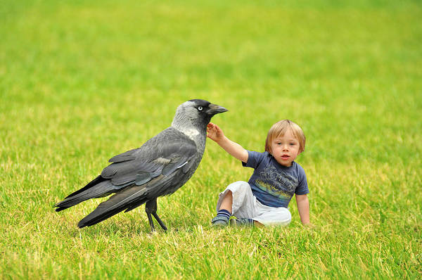 Wall Art - Photograph - Tiny Boy Playing With A Crow by Jaroslaw Grudzinski