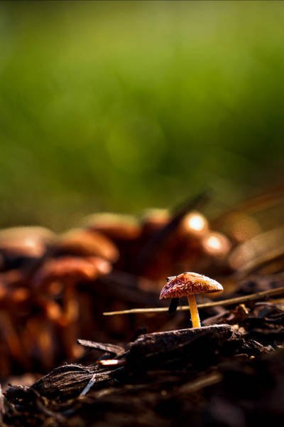 Photograph - Tiny Shrooms by Keith Allen