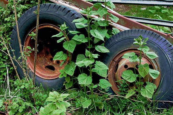 Photograph - Tires And Ivy by Lorraine Devon Wilke