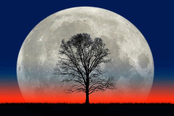 Photograph - Titanic Moon And Tree by Larry Landolfi