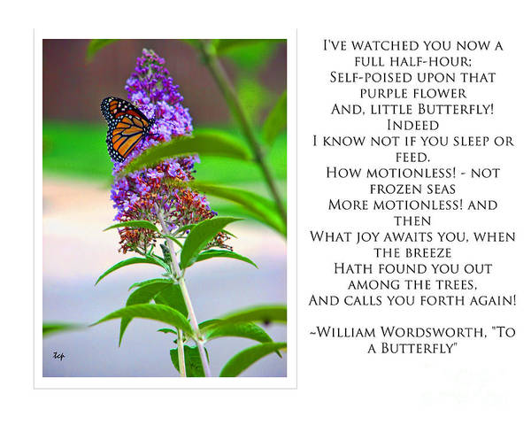 Photograph - To A Butterfly--ww by Traci Cottingham