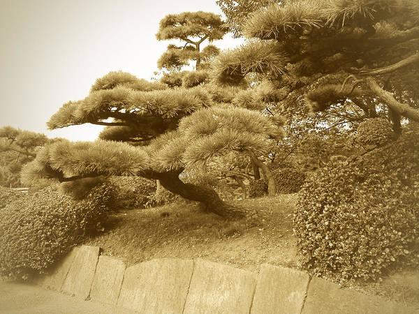 Palace Wall Art - Photograph - Tokyo Park by Naxart Studio