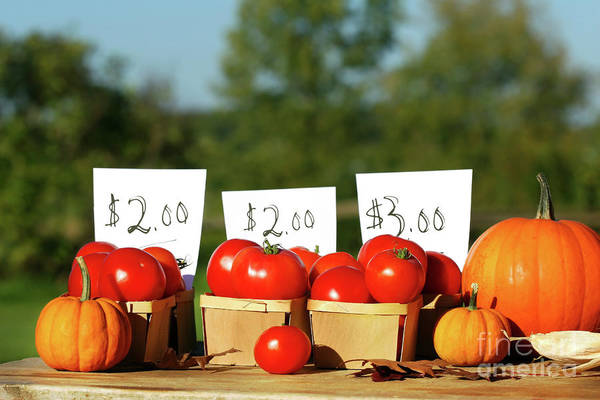 Wall Art - Photograph - Tomatoes For Sale by Sandra Cunningham