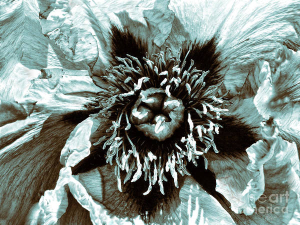 Photograph - Toned Floral Print by Jeff Breiman