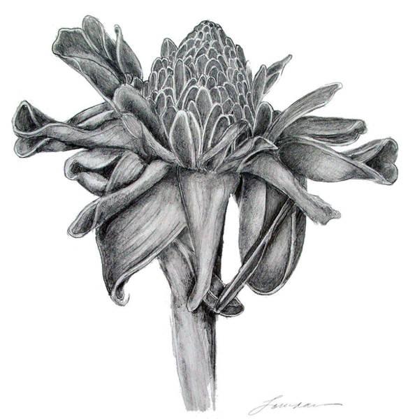 Oahu Drawing - Torch by Lourdan Kimbrell