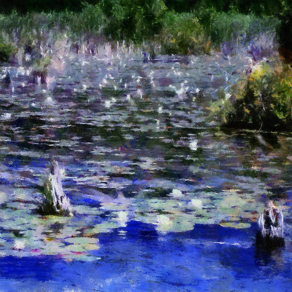Photograph - Torch River Water Lilies Ll by Michelle Calkins