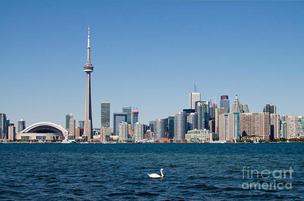 Photograph - Toronto Skyline by Les Palenik