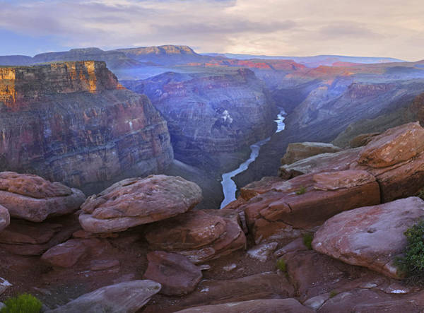 Photograph - Toroweep Overlook View Of The Colorado by Tim Fitzharris