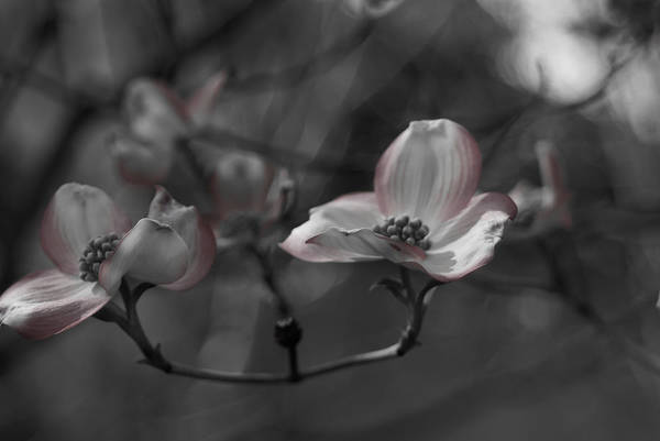 Photograph - Touch Of Color by Colleen Coccia