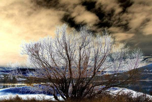 Wall Art - Digital Art - Touch Of Frost by Will Borden
