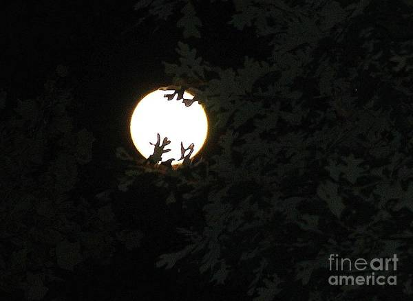 Wall Art - Photograph - Touching Grandmother Moon by Pauline Ross