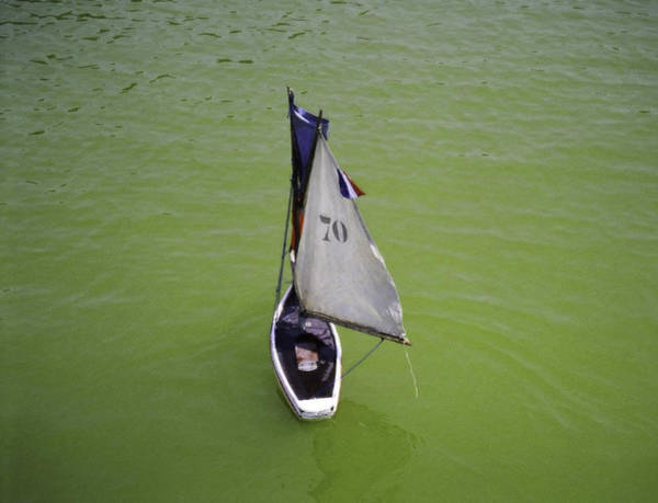 Photograph - Toy Sailboat On Pond by Donna L Munro