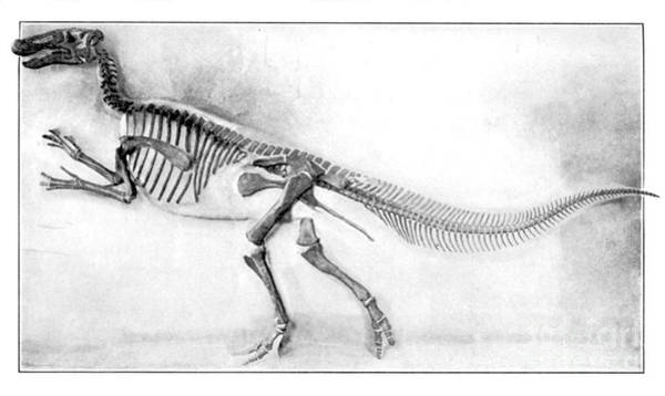Photograph - Trachodon by Science Source