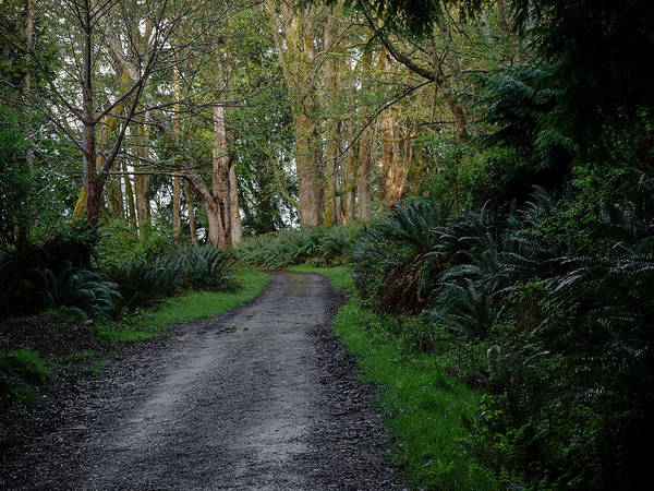Photograph - Trail Through Old Growth Forest by Jim DeLillo