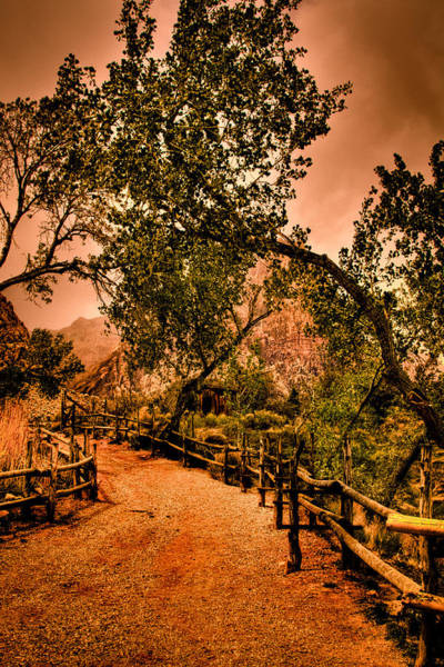 Photograph - Trail To The Lake At Red Rocks Canyon by David Patterson