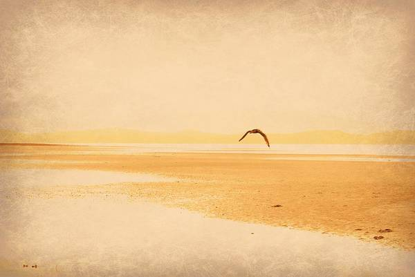 Photograph - Tranquillity by Marilyn Wilson